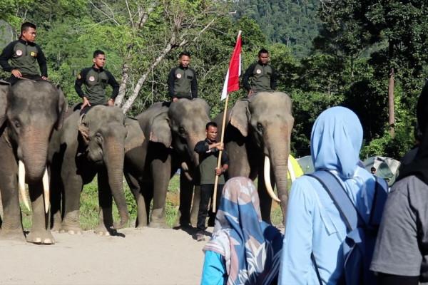 Kaum muda Aceh peringati Hari Pahlawan bersama gajah