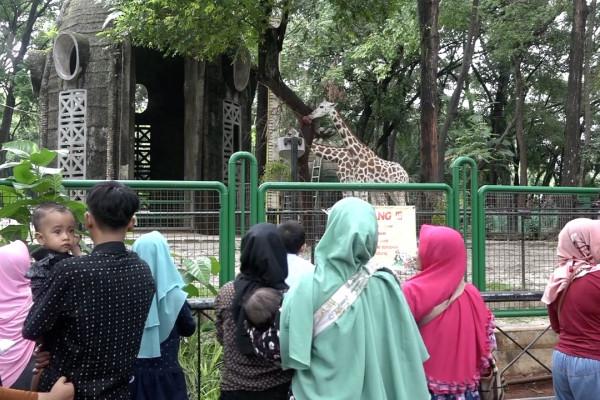 Taman Margasatwa Ragunan, pilihan favorit saat libur Natal