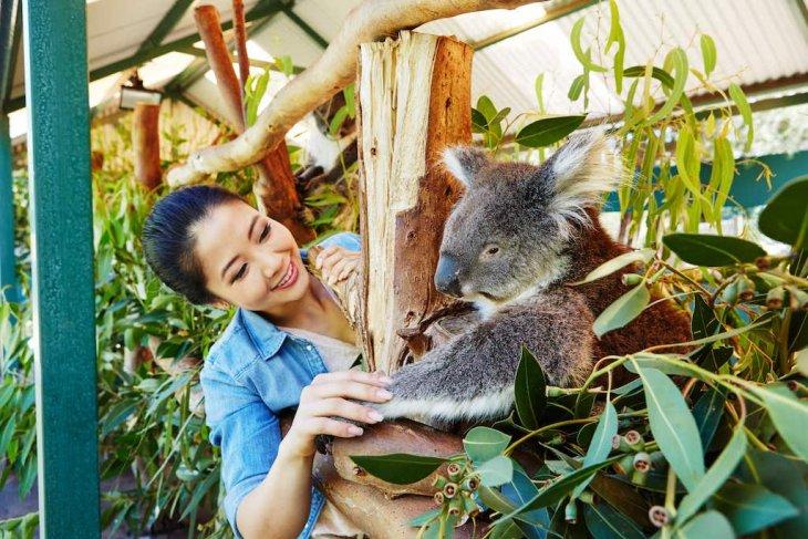 Jalan-jalan virtual ke Australia Barat #dirumahaja